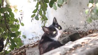 cat sitting on roof under the tree  - Video
