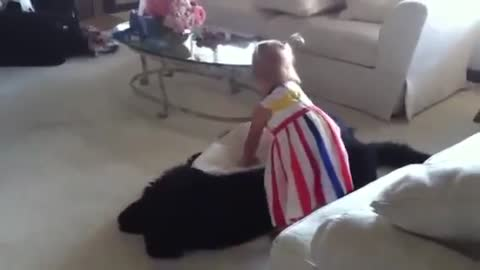 Toddler tries to put giant dog down for nap