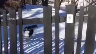 Dog in snow with stick - Video