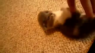 Adorable little kitten - Video