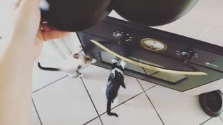 2 Small Kittens Want to Eat