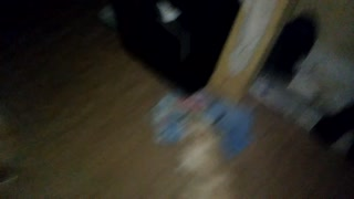The dog was frightened, having seen a ghost  - Video