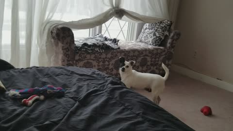 Dog needs owner's help retrieving toy