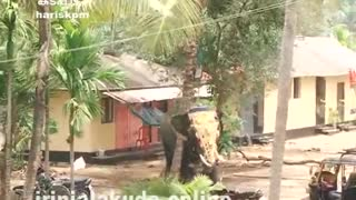 Elephant Rampage at temple Latest Kerala, India  - Video