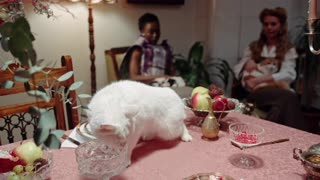 CAT EATING ON TABLE