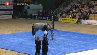 After This, You'll Never Doubt The Smartness of Horses! - Video