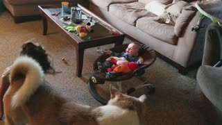 Big sister go's crazy trying to make baby laugh  - Video