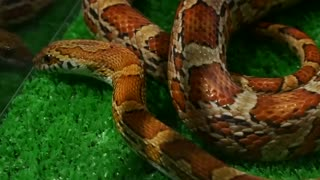 Snake cafe opens in Tokyo's fashion district - Video