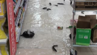 Aquarium Breaks In Supermarket, Flooding The Aisles With Fish - Video