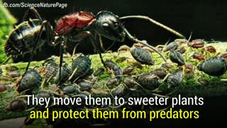 Discovery Animal - Ants are incredibly smart and powerful - Video