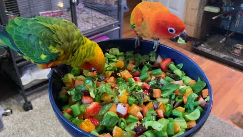 2.23.2020 Our Sun Conure's eating yummy foods.