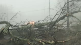 Tree Falls during Severe Storm