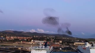 Massive flock of birds create incredible natural phenomena - Video