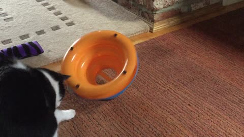 Crazy Cat Finds New Way To Play With Toy