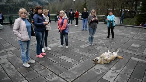 Dog gets more attention than tourist attraction