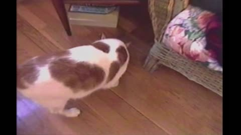 Mouse Plays Possum To Escape Hunting Cat