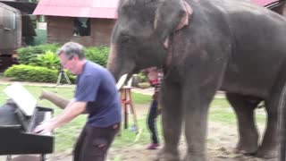 12 Bar Blues - Piano Duet with Peter the Elephant - Thailand - Video