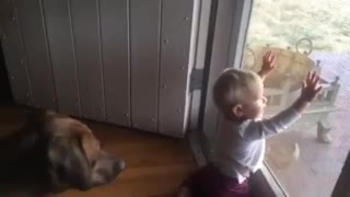 This Big Dog Is All The Entertainment A Little Girl Needs - Video