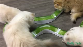 Cats got a new toy  - Video