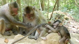 Baby Monkey Love To Play With Friends - Video