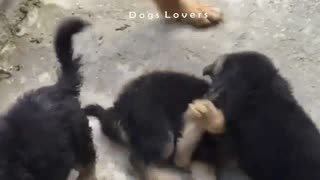 Group of Dogs Playing with Each Other