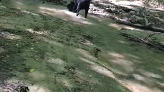 dogs having fun in the forest