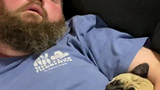 Snoring Competition Between Man and Pug