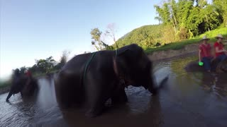 Elephant plants kiss on a GoPro camera