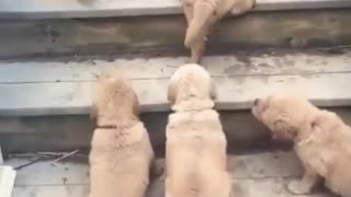 Cute Puppies - Funny Puppies Video Compilation - Video