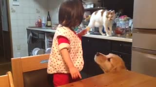 The Japanese little girl in the evening. with animals! cat and dog! - Video