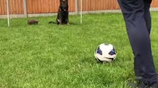 Goal-keeper dog has World Cup fever, blocks free kick - Video