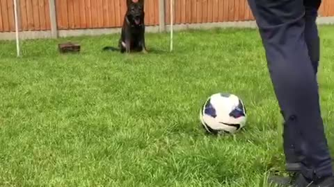 Goal-keeper dog has World Cup fever, blocks free kick
