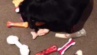 Clever Dogs Choose New Toy