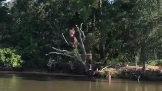 Man falls off tree branch - Video