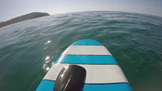 Surfer Has Close Encounter with Whale - Video