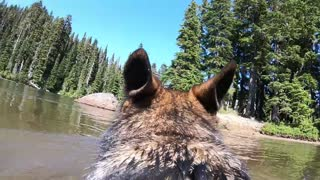 Go-Pro mounted to dog's back captures stunning footage - Video
