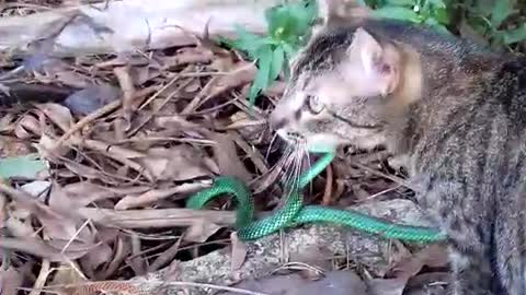 Courageous Cat Stares Down Snake