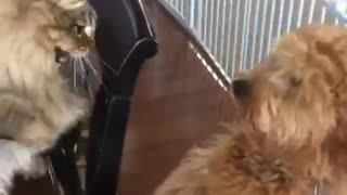 Cat hits dog with paw - Video