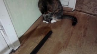 The cat versus the vacuum cleaner