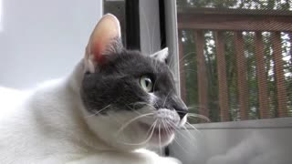 How This Cat Was Chatting In Front Off Window - Very Funny