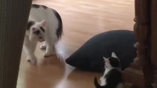 Mama cat plays with her kitten
