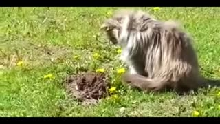 Cat found someone underground - Video