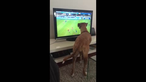 Dog Watches Ball On TV