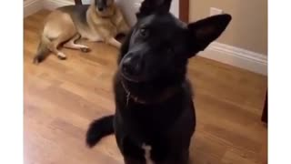 Woman tells her dogs a story using words that they know