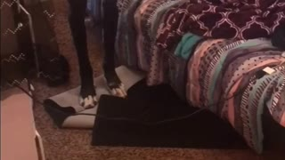 Great Dane Trapped In Room by Tiny iPad Charging Cord - Video