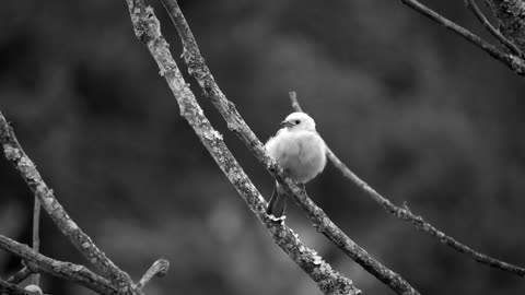 Black And White Ave Trees bird