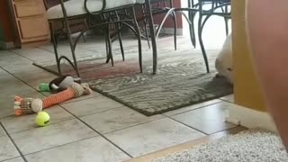 my dog doesnt want to play with bottles