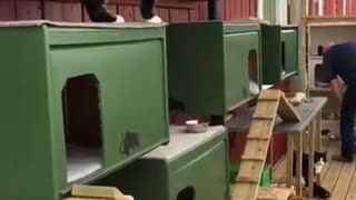 The Ultimate Home For Cats - Video