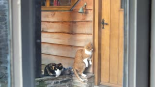 Polite Cats Ring Doorbell To Signalize It's Mealtime - Video