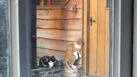 Polite Cats Ring Doorbell To Signalize It's Mealtime